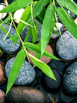 The river stones and bamboo leaves with raindrop zen like concepts.