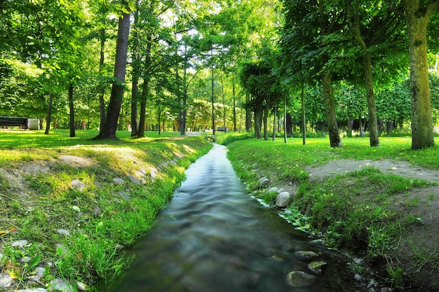 River in summer  park.  nature composition.
