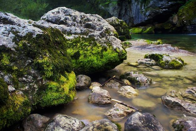 スロベニアのボベツで日光の下でコケに覆われた岩に囲まれた川