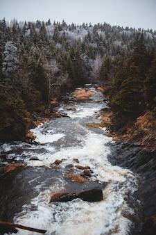 Река в окружении леса