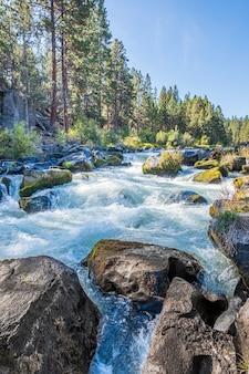 Река окружена цветами осенью в дневное время