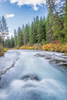 昼間の秋に花に囲まれた川