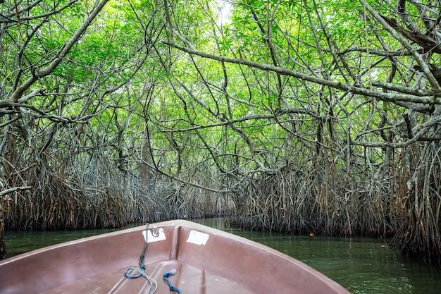 Река, тропические мангровые заросли цейлона, вид с лодки