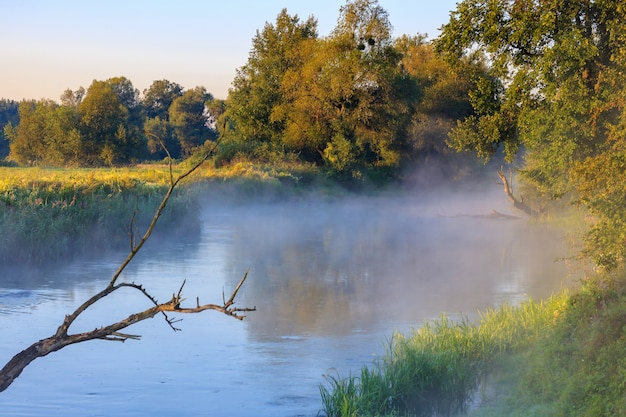 晴れた夏の朝に氾濫した木の幹を背景に表面上に霧のある川。川の風景