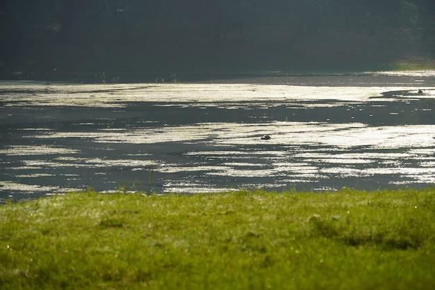 푸른 잔디가 있는 강 이미지 수질 오염 이미지