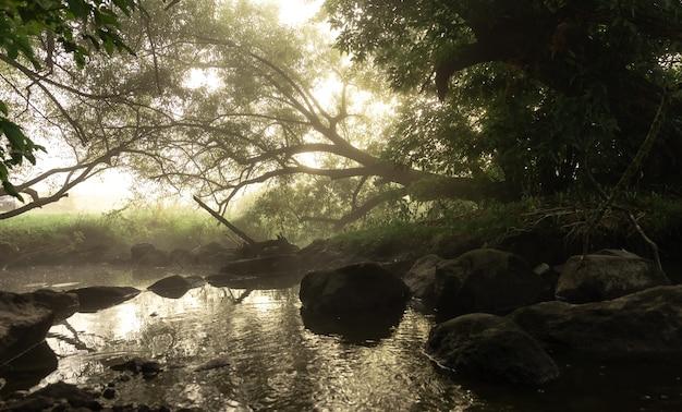 Fiume con rapide nella nebbia nella foresta al mattino all'alba.