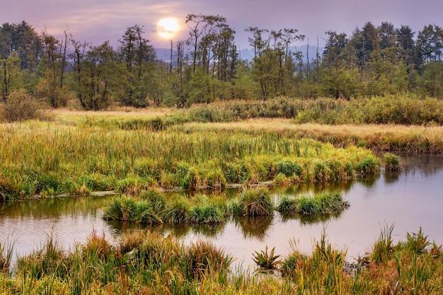 日没時に遠くにスゲの茂みと木がある川