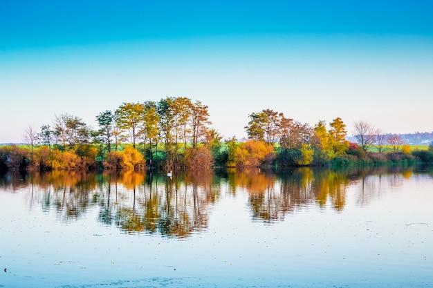 秋にはきれいな水に映る木々のある川。川沿いに浮かぶ白鳥