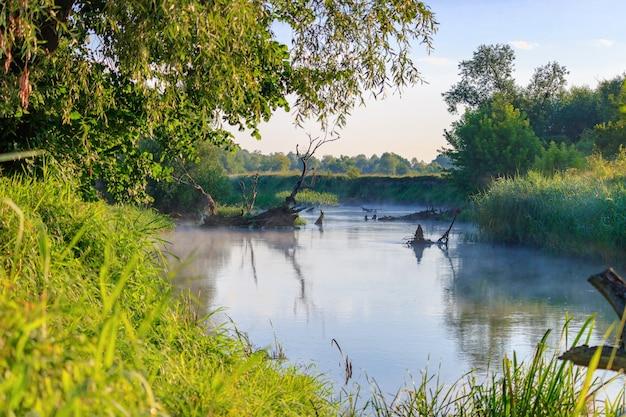 晴れた夏の朝、緑の木々や草を背景に氾濫した木の幹がくっついている川床。川の風景