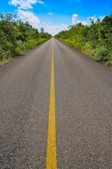 Riviera maya jungle rainforest road