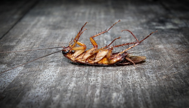 Roaches lie dead on wooden floor