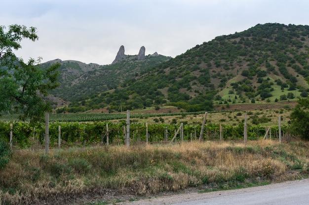 山とブドウ園の谷に沿った道夏の晴れた日