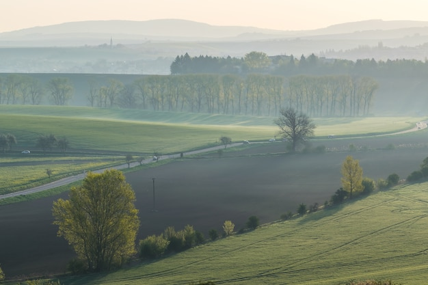 아침 안개 속에서 푸른 언덕과 나무 사이 도로
