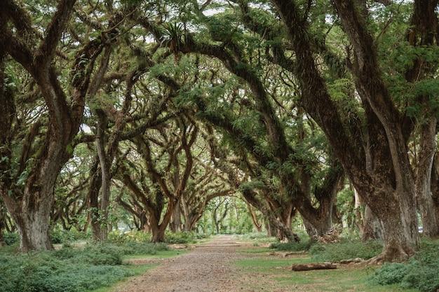 Дорога среди больших деревьев