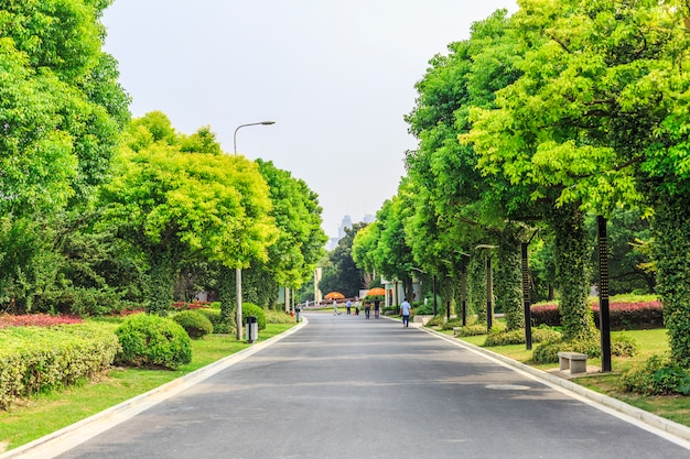道路や樹木