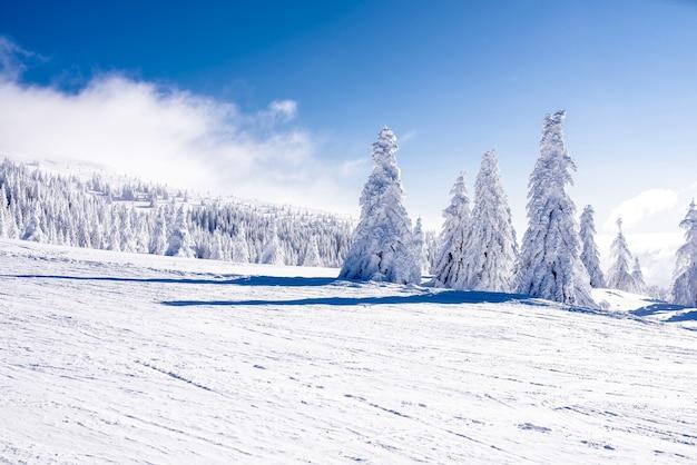 전나무로 둘러싸인 산악 스키장의 도로