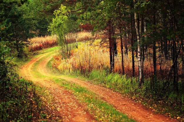 Road in the autumn forest sunset soft focus toned photo