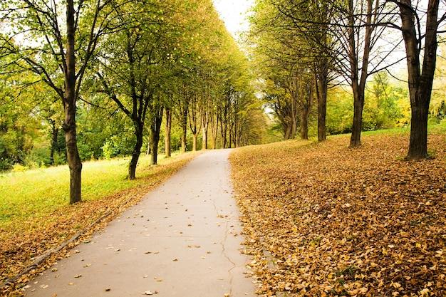 公園の道の秋