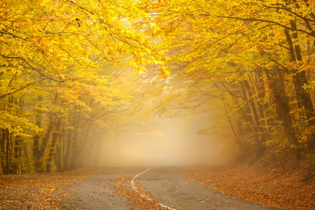 The road and a beautiful autumn forest with yellow leaves in fog