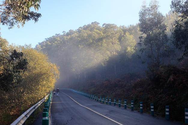 日の出の光と地平線の霧のある森の木々の間の道。ビスカヤ。ヨーロッパ