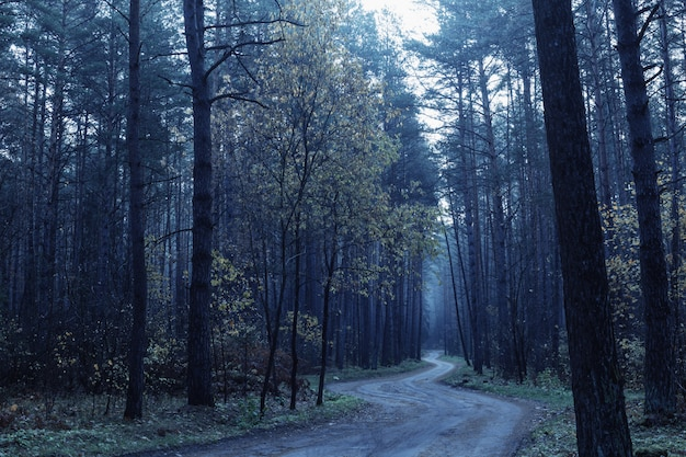 Road in blue mystic autumnal forest