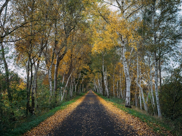 Road covered in dried leaves surrounded by trees at daytime in autumn