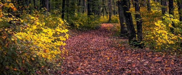 秋の森、パノラマで落ち葉で覆われた道路。秋の森の美しい風景