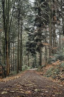 숲에서 잎으로 덮여도