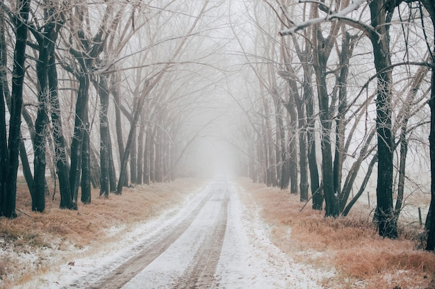 Road covered with snow between the bare trees on a foggy winter day
