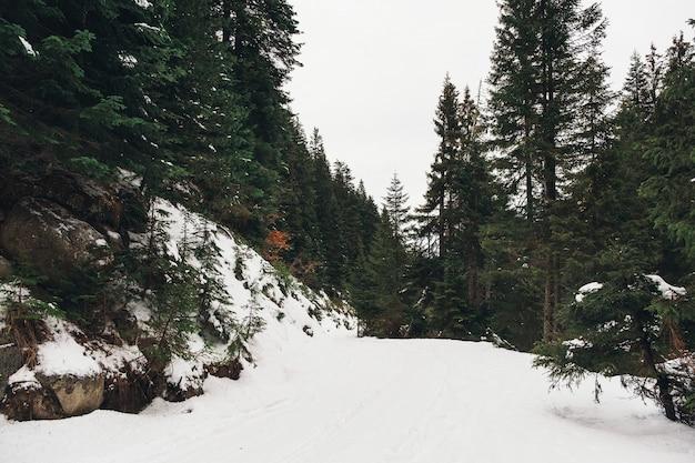 Дорога покрыта снегом в горном лесу