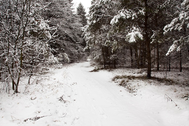 The road covered with snow in a winter season