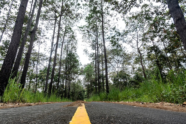 Road cuts through redwood forest in thailand
