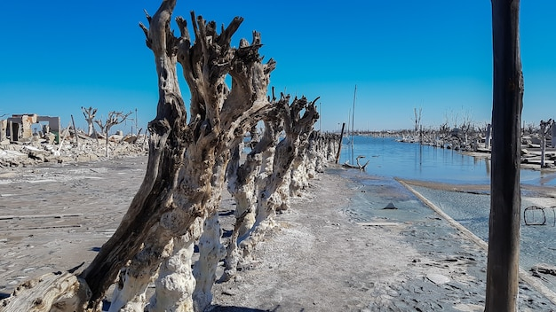 Road of dry trees in the city of epecuen.