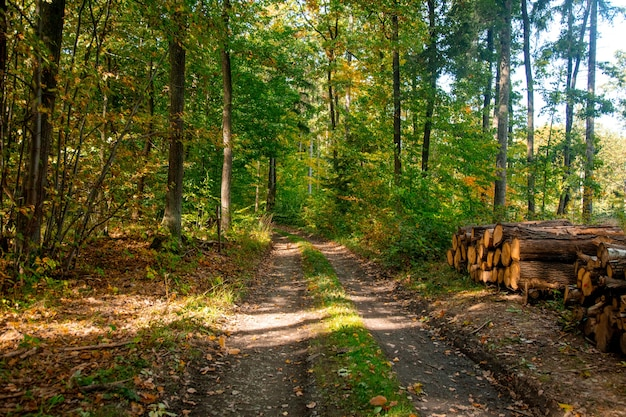 Road in a forest of lower silesia, poland