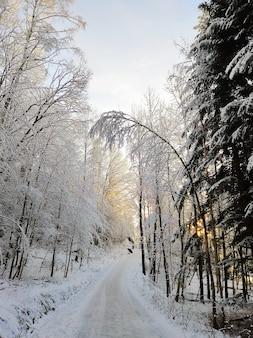 Strada in una foresta circondata da alberi coperti di neve sotto la luce del sole a larvik in norvegia