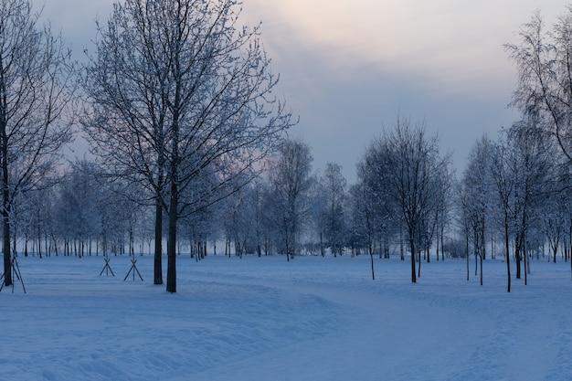 나무와 저녁 공원을 통과하는 도로는 눈으로 덮여 있습니다.