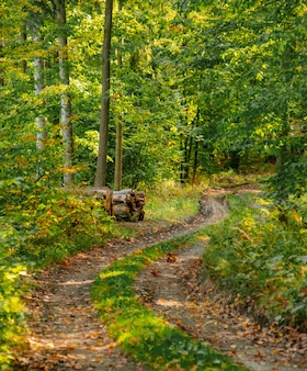 폴란드 lower silesia 숲의 도로