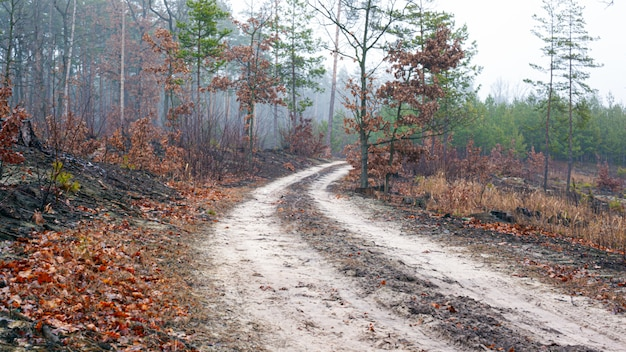 Дорога в туманный утренний лес.
