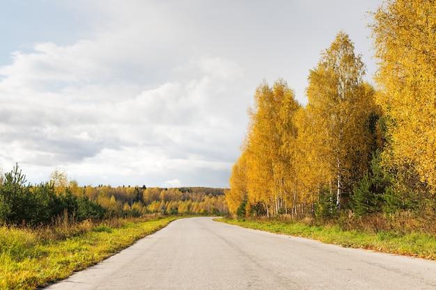 Дорога в осеннем лесу в солнечный день