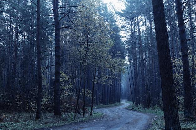 Дорога в синем мистическом осеннем лесу