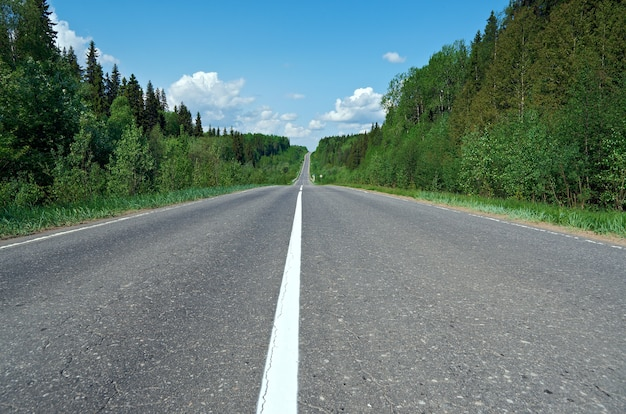 Дорога в русском лесу. архангельская область