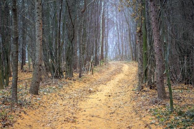 乾燥した松の木に囲まれた秋の森の道_