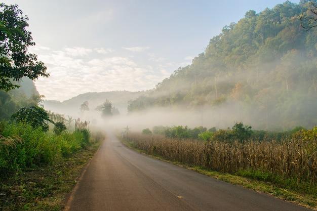 Дорога в туманном лесу винтажный стиль