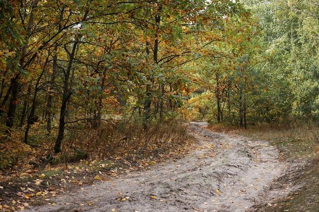 Дорога в лесу осенью. свободное место для текста