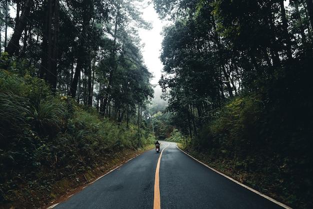 森の中の道梅雨自然の木々と霧の旅