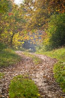 緑と茶色の葉を持つ木々と森の中の道