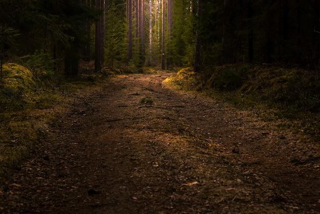 키가 큰 푸른 나무가있는 숲 한가운데 도로