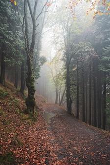秋の山の路、紅葉、紅葉。
