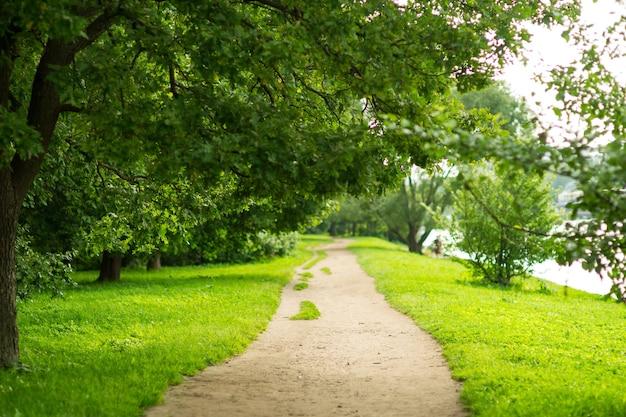 Дорога в парке со скамейками и старыми деревьями, растущими вдоль аллеи, красивый летний день в парке
