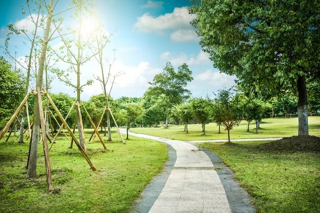 公園の道 Premium写真
